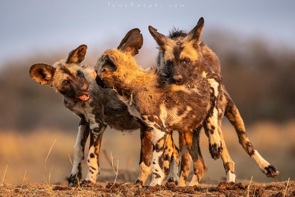 Namibia wildlife - Tomer Razabi