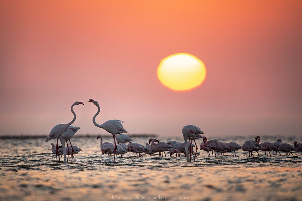 Namibia flamigos - Tomer Razabi