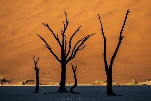 Deadvlei Namibia - Tomer Razabi