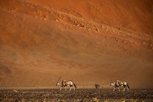 Namibia sand dune - Tomer Razabi